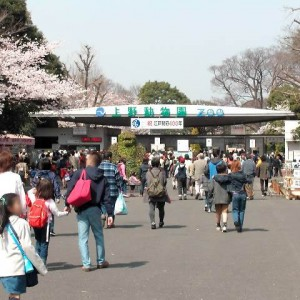 Japanesquest - Ueno Zoo.