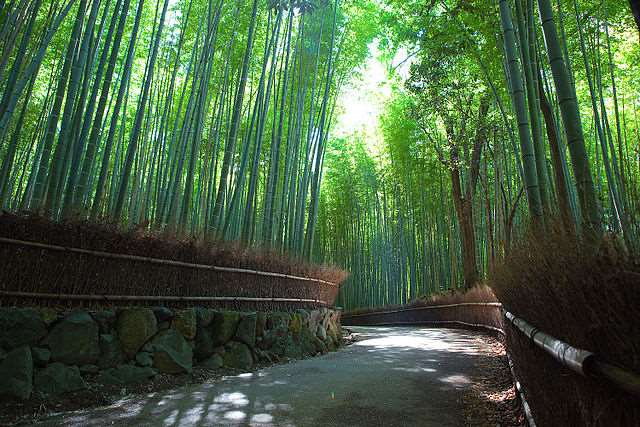 Bamboo Forest in Arashiyama | Japanesquest